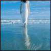meandering: Base - walk into the ocean
