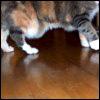 mickey's feet