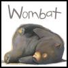 curiouswombat