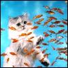 pretty: cat and fish