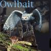 owlbait: Owlbait