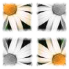 white daisy tiled