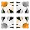 white daisy tiled