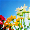 Rainbow fleurs