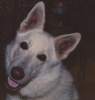 lux_the_dog userpic