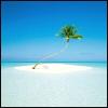 Robyn Goodfellow: island