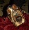 dbthedog userpic