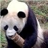thegiantpanda userpic