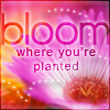 :~:Dreamz:~:: bloom