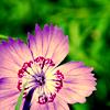 purplefl0wer userpic