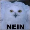 Owl:// NEIN >|