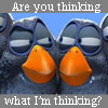 scrubschick: birds-RUthinking?