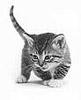 katewallace: kitten