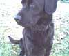 austiepuppy userpic
