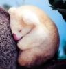 Rosepurr: tired