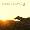 Still Flying
