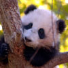 dr_zzhang_phd userpic