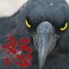 Wrath Bird