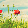 alliesonb userpic