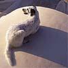Dr. Philophobic Sheep [userpic]
