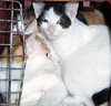 cats_social