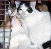 kit: cats_social