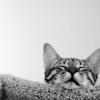 Maire: cat