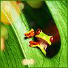 жабенятко (rainy_icons)