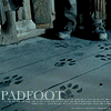 Potter- Padfoot