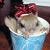 flying_squirrel userpic