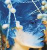 piranha - bluebird