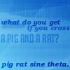 pig rat sine theta
