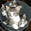 bucket-o-kittens