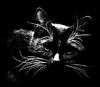 juls_cat userpic