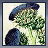 Artichoke/Thistle