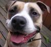 ruxpindog userpic