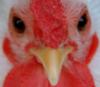 sqweezil userpic