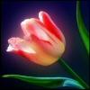 jarena userpic