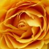 kathy83 userpic