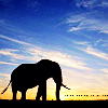 animal → elephant