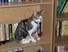 books, cat, bookshelf