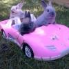 LocaKitty: Holla Bunny