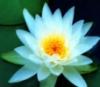 artimiria userpic