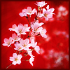 Red Blossoms