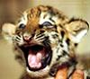 тигря