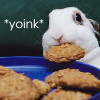 Cookie swiping bunny
