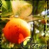 amirinka userpic