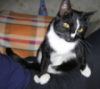 Косая кошка
