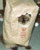 LurkerWithout: Bag cat