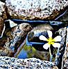 цветуёчек